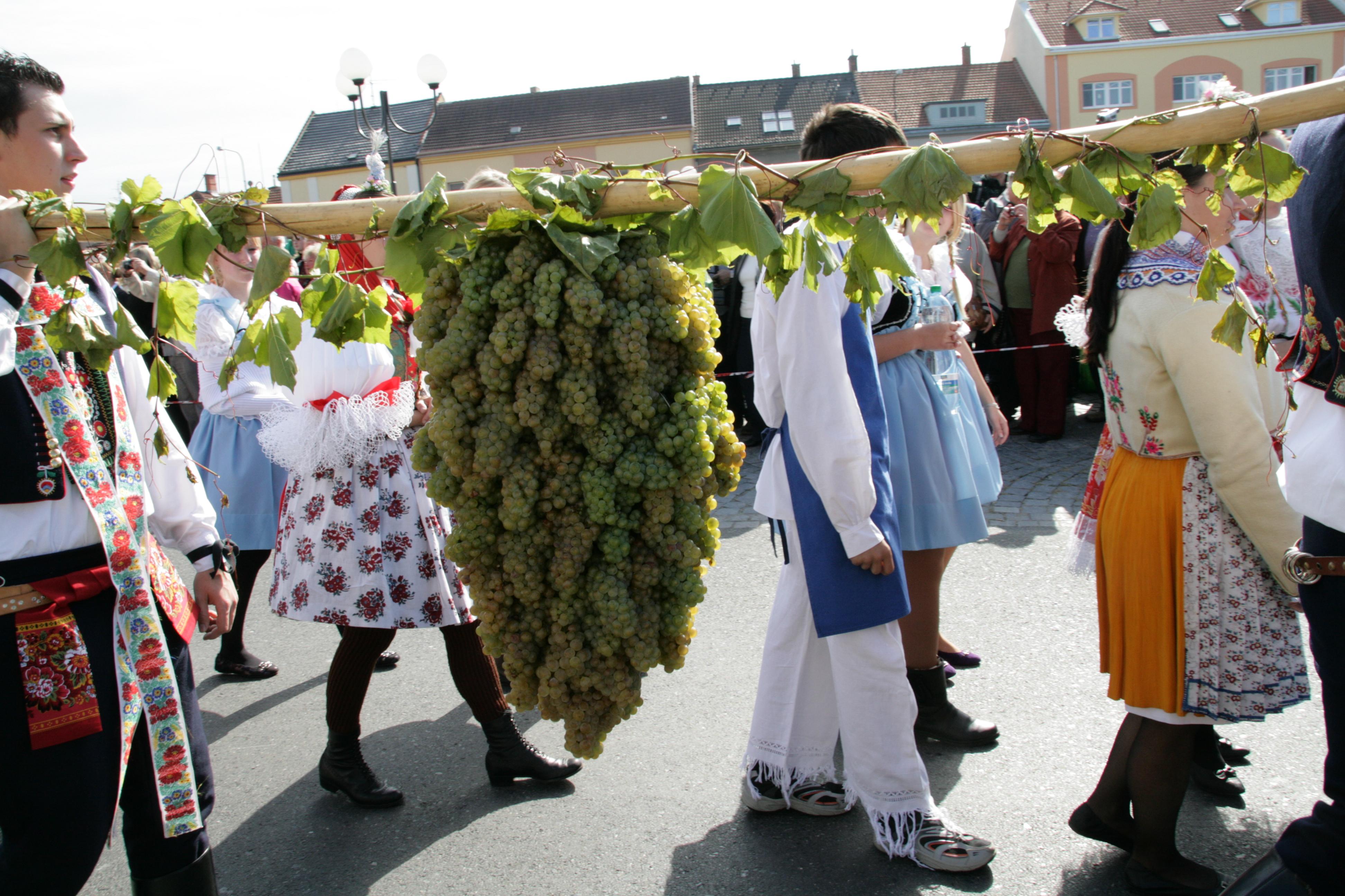Krojované vinobraní