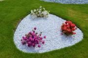 "Azalea japonica ""SCHNEEPERLE"", Azalea japonica ""GEISHA PURPLE"", Azalea japonica ""GEISHA ORANGE "" - azalka japonská"
